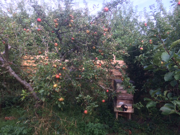 Bee Hive in the Orchard